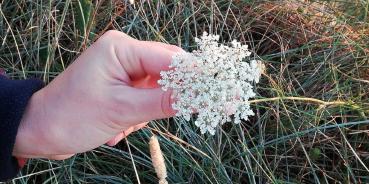 Regain-Mure-Ardeche-Nature23