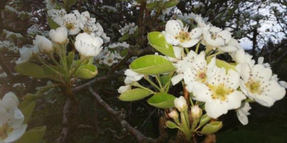Regain-de-la-Mure-fleurs1