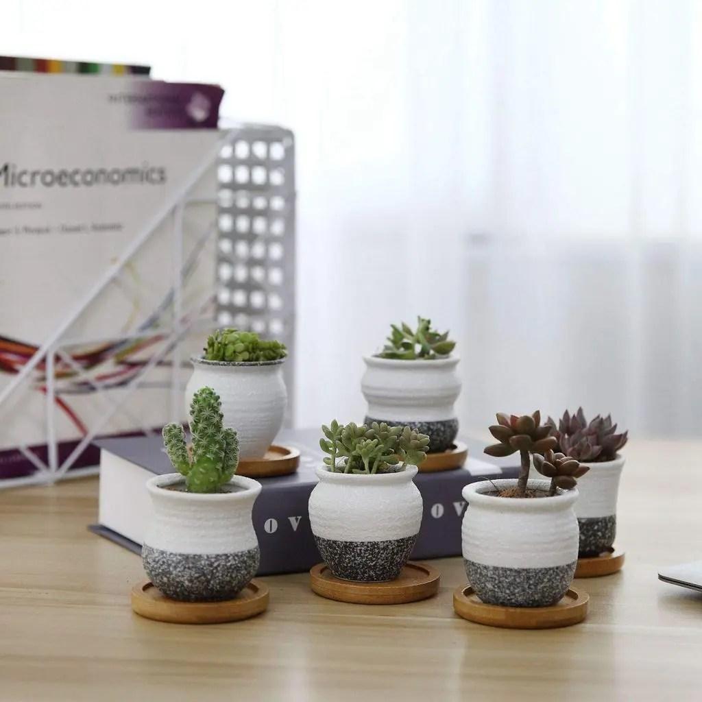 Cactus y crasas en hogar