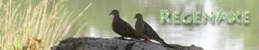 comon-ground-doves-header-2.jpg