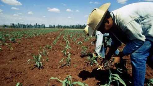campo-mexicano