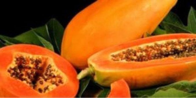0701 PAPAYA2 300x150 - Injustificada la alerta por papaya mexicana con salmonella en EU: Sader