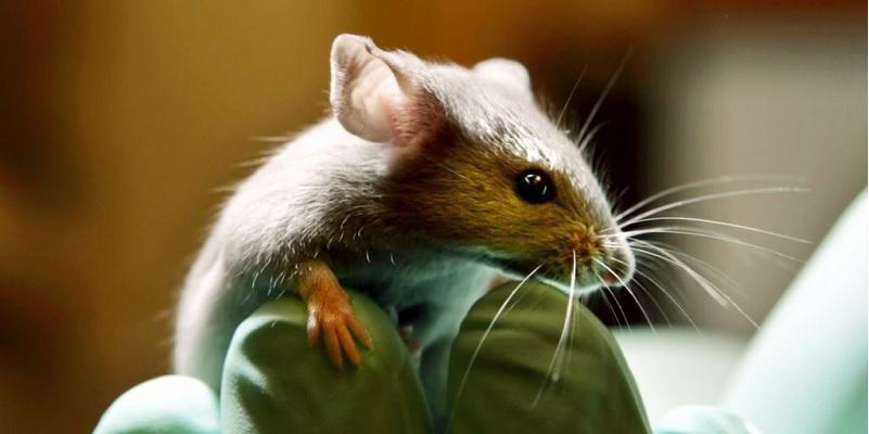 0704 VIH3 - Eliminan por primera vez el virus del VIH en ratones vivos