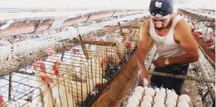 Huevo, México el que más consume