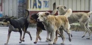 Esterilización canina previene enfermedades en humanos y contaminación