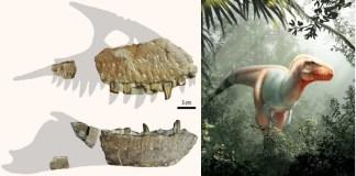Fósil pariente del Tiranosaurio Rex