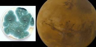 Microbios podrían sobrevivir temporalmente en Marte