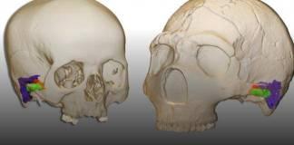 Estudio revela que neandertales podían oír y hablar como nosotros