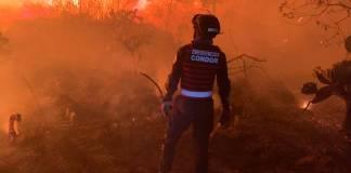 Asi fue el incendio que consumió parte de la reserva ecológica de Tlalpan