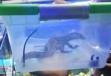 PROFEPA rescata más de 60 animales exóticos de mercado de la CdMx