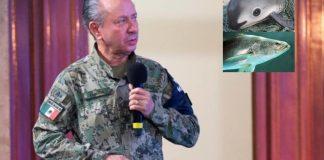 México combate la pesca ilegal de la totoaba y vaquita marina en Baja California