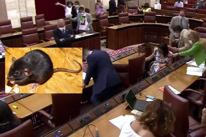 Rata irrumpe en Pleno del Parlamento de Andalucía y desata caos