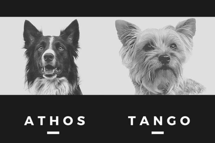 Diseno sin titulo 5 1 - Detienen a hombre que habría envenenado a los perros rescatistas Athos y Tango