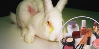 Senado aprueba por unanimidad leyes que prohíben pruebas cosméticas en animales