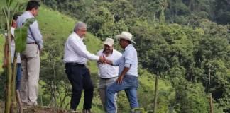 Sembrando Vida brinda empleo a 430 mil mexicanos y se invierten 26 mil mdp anuales