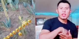 TikToker guatemalteco insulta a mexicanos diciendo que parecen puercos por comer nopales