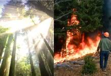 Semarnat contra deforestación y tala clandestina