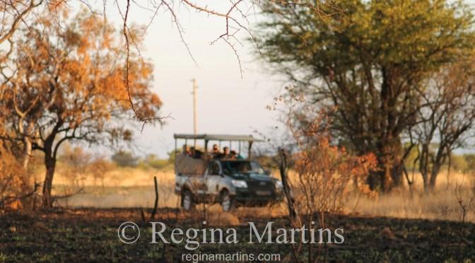 WordPress Weekly Photo: Blurry Bush Safari