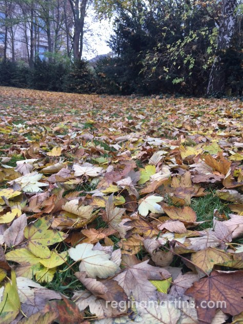 The sounds of footsteps cushioned by a thick layer of damp leaves ©2016 Regina Martins