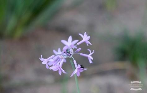 A flower for you ©2016 Regina Martins
