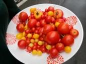 17:07h schmackhafte Tomaten aus dem Hausgarten in verschiedenen Formen und Grössen