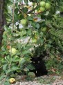 Max unter dem Apfelbäumchen