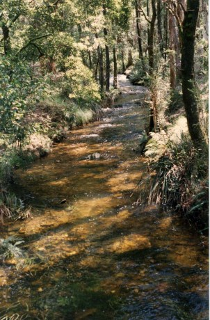 Lerderderg River, currently dry at this location