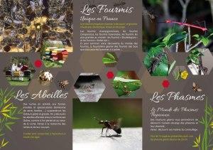 Abeille Vivante et de la Cité des fourmis