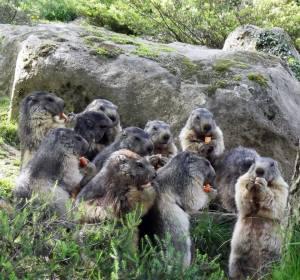 Parc Animalier des Pyrénées Marmottes