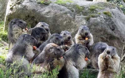 Parc animalier des Pyrénées