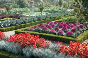 chateau_jardins_villandry_potager
