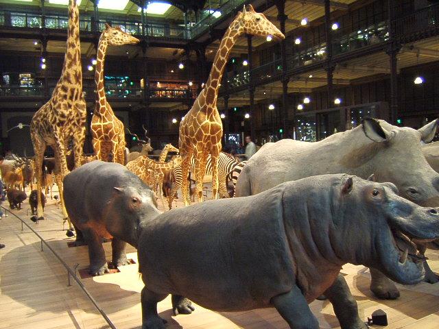 La Grande Galerie de l'Évolution