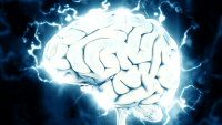 Knowledge to soon be uploaded to the brain, Scientists say.