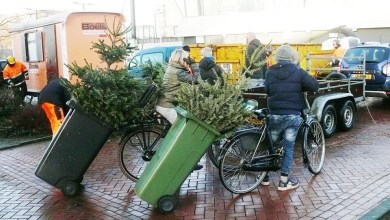 Photo of 3271 kerstbomen ingeleverd in Purmerend