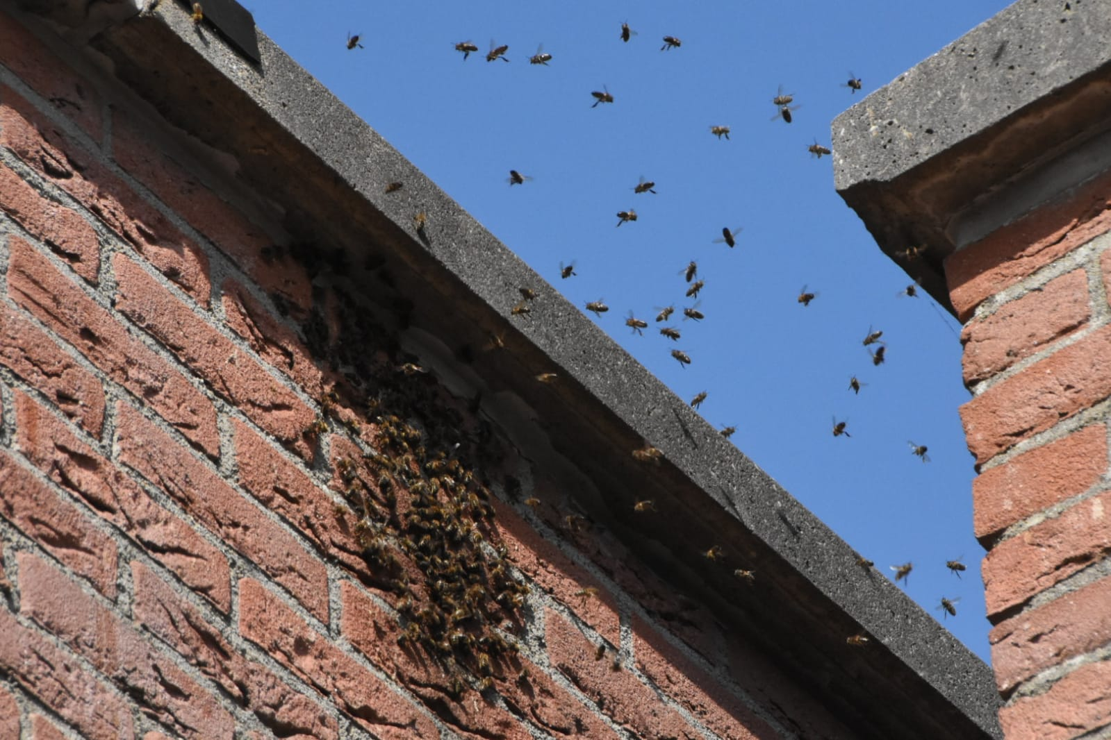 Bijen bezoeken kerk in Purmerend (fotoreportage)