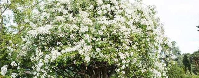 Spring Wedding Ideas 25 Of The Prettiest Spring Wedding Ideas
