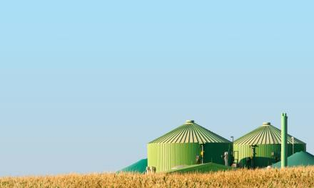 IEA Annual Report 2019 on Bioenergy
