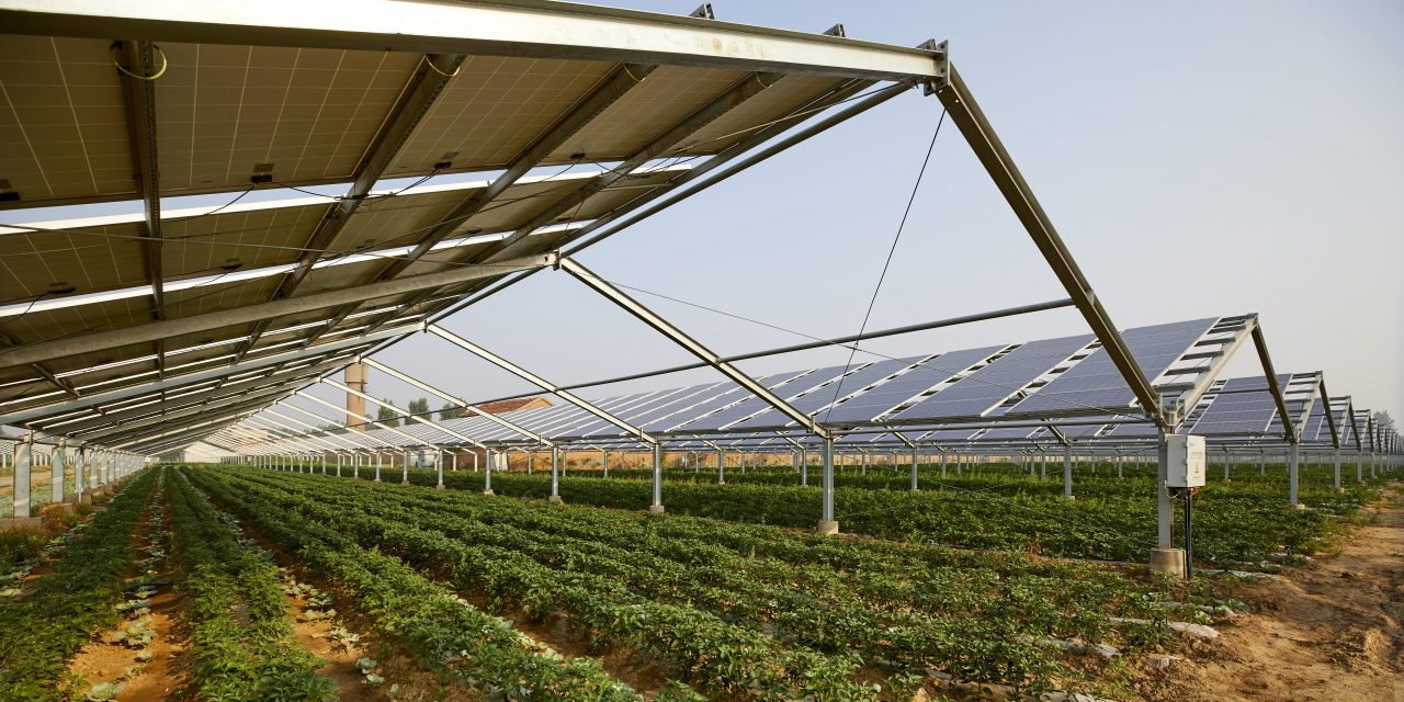 Baofeng Group building a 1 GW agrivoltaic solar park in China