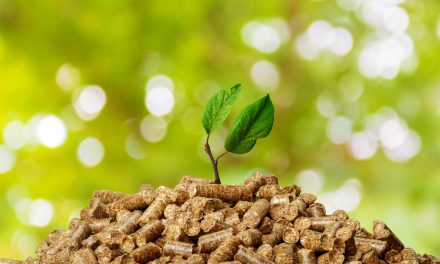 Indonesia's Biomass Cofiring Bet: Beware of the Implementation Risks