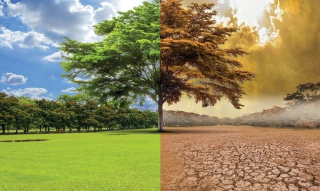 Green Deal – What are the consequences of climate ambitions for your portfolio?