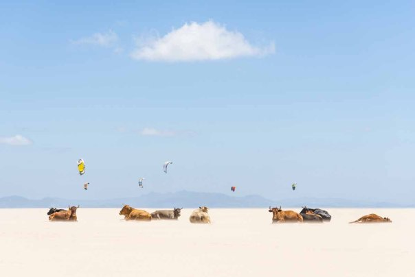 """Andrew Lever, """"Cows and Kites"""""""