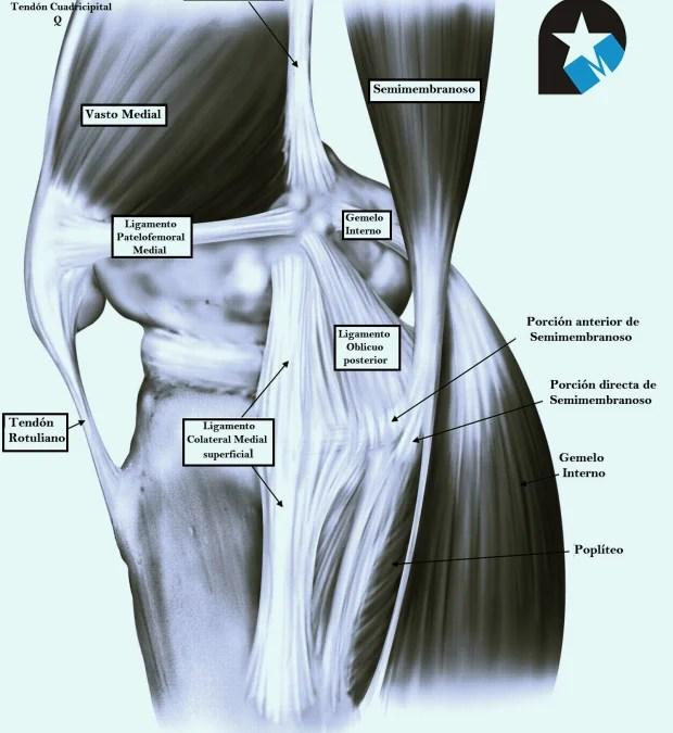 El aparato extensor de la rodilla - Rehabilitación Premium Madrid