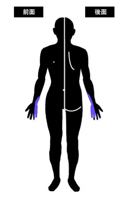 尺骨神経の知覚領域