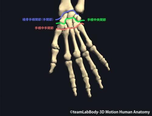 手根骨が構成する関節