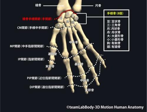 手関節の構造