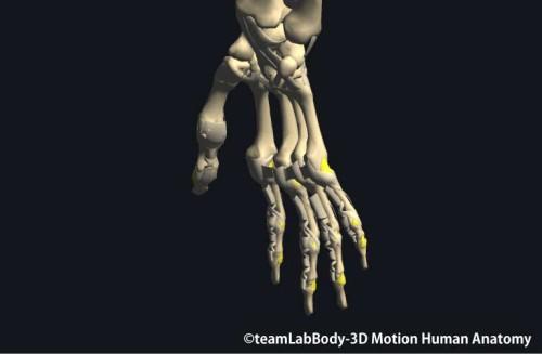 指の側副靭帯