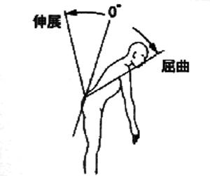 体幹屈曲・伸展