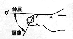 母趾IP関節屈曲・伸展