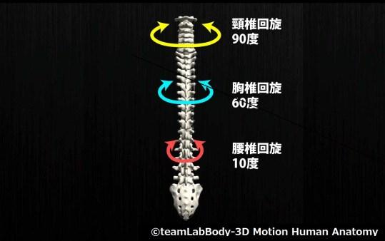 脊椎の回旋,頸椎,腰椎,腰椎