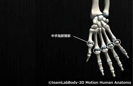 中手指節関節